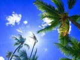 Palmer og blå himmel